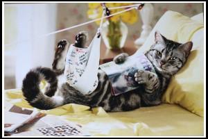 1-sick-cat-img_1572