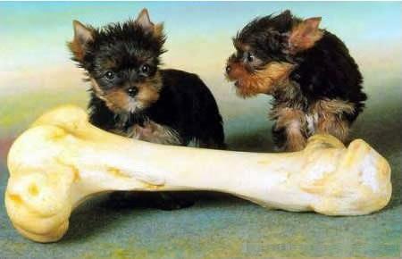 d857da5cb7cc Lehet-e a kutyának csontot adni? | dr. Mérő Gábor állatorvos