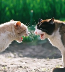 cat-fight-300x336
