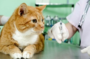 cats-vaccination-orange