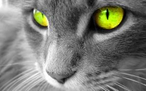 Beautiful-Cat-cats-16121794-1280-800