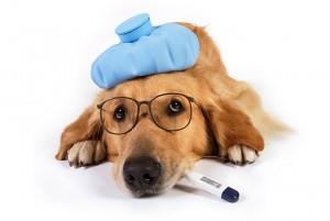 kutya lázmérővel
