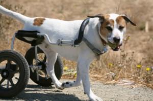 kutya kerekesszék